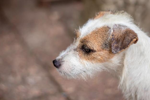 Retrato de perro blanco en el piso de ladrillo marrón