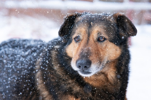 Retrato de perro callejero triste sin hogar solitario en la nieve en un día frío de invierno cubierto de nieve. cuidado de animales, adopción, concepto de refugio.