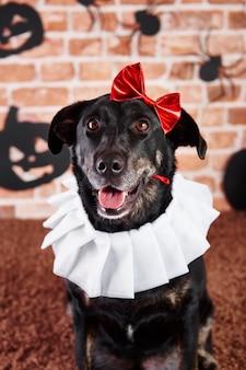 Retrato, de, perro, en, disfraz de halloween