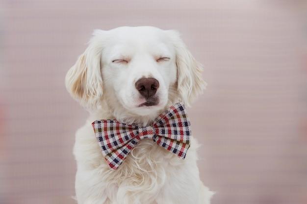 Retrato perro elegante que celebra un cumpleaños, carnaval o aniversario
