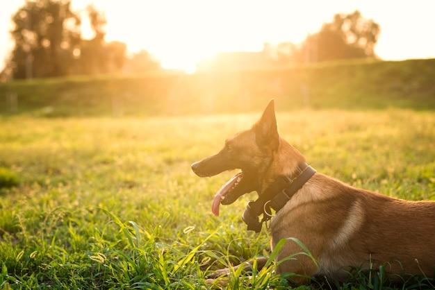 Retrato de perro entrenado esperando el comando en el parque