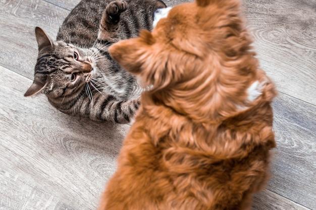 Retrato de un perro y un gato de cerca. jugar juntos en el suelo