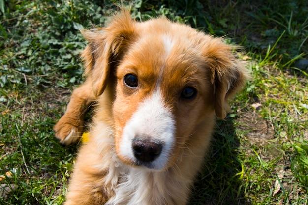 Retrato de perro en georgia, luz natural y al aire libre
