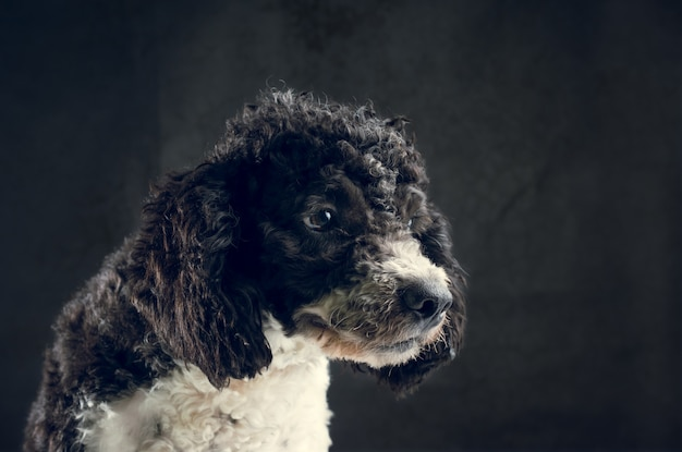 Retrato de perro sucio