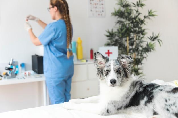Retrato de un perro con veterinario de sexo femenino de pie en el fondo