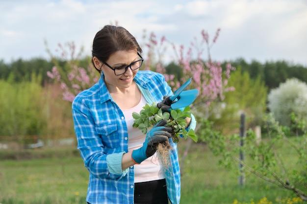 Retrato de primavera de mujer madura en jardín con herramientas, arbustos de fresa.
