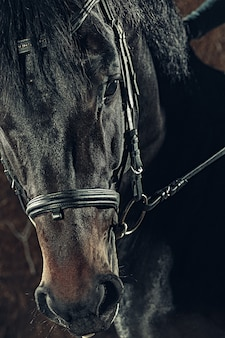 Retrato de primer plano de cabeza de caballo