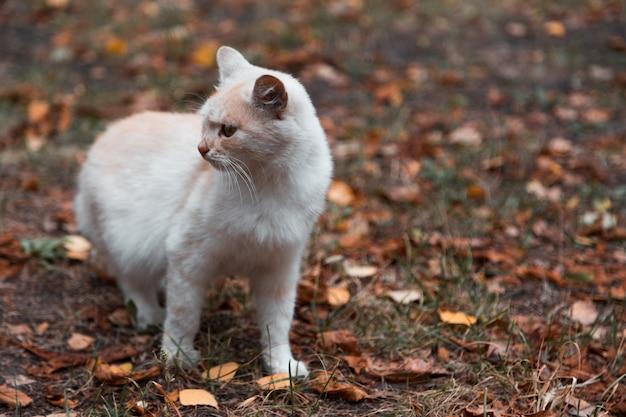 Retrato de primer plano de gracioso lindo jengibre adorable pequeño gatito blanco joven gato con los ojos cerrados sentado soñando durmiendo al aire libre.