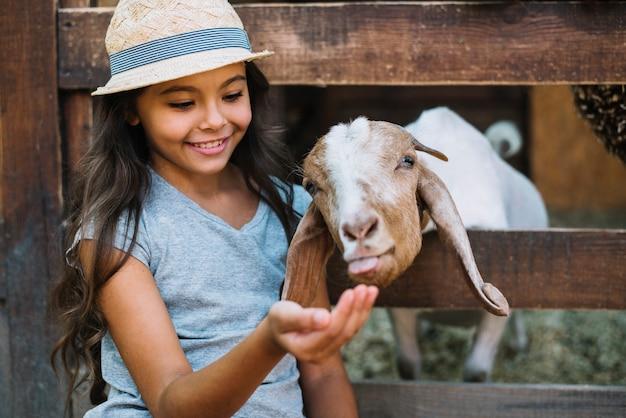 Retrato sonriente de una niña alimentando a la cabra en el establo