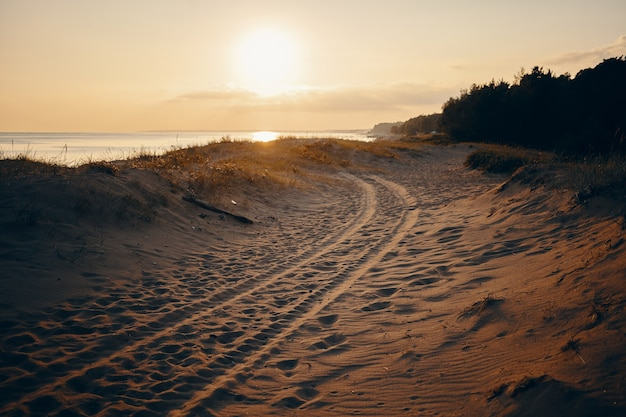 Retrato de verano al aire libre de huellas de neumáticos en la playa de arena con cielo rosado, mar y árboles. playa desierta con huellas de neumáticos de cuatro vehículos de tracción. naturaleza, vacaciones, mar y viajes