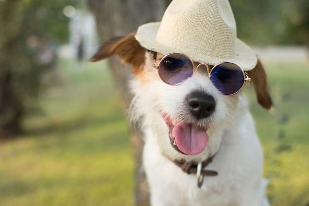 Retrato de verano perro