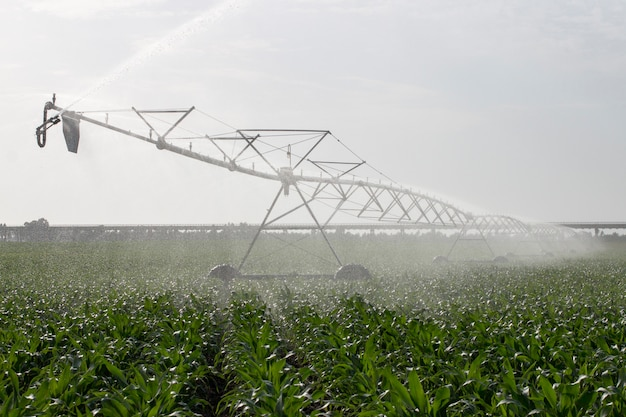 Riego del campo de maíz