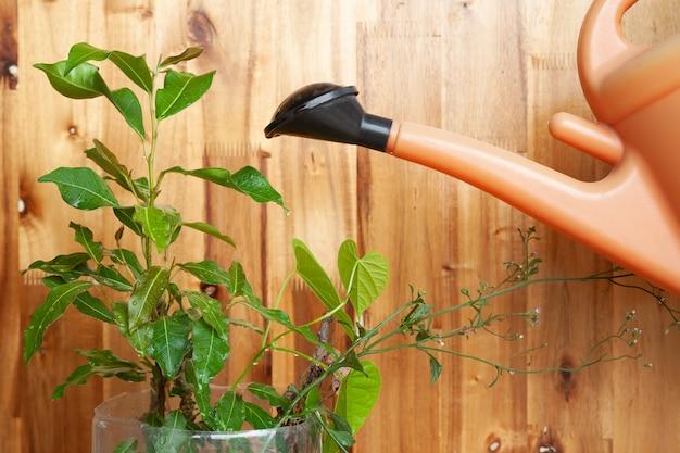 Riego de la planta de regadera plástica sobre fondo de madera