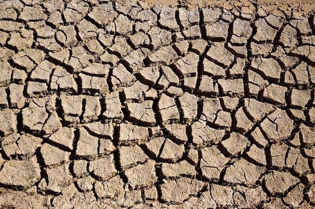Riego seco de zanja de suelo arcilloso en campos de albufera.