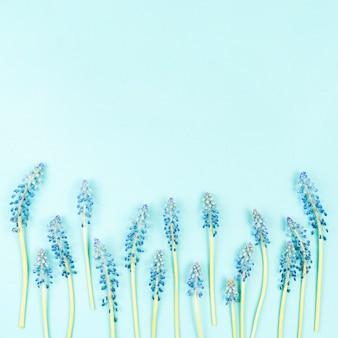 Rimel inferior flores sobre fondo azul