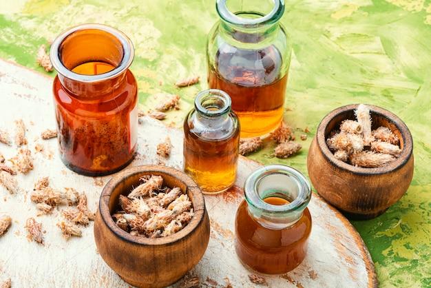 Riñones de pino en medicina popular