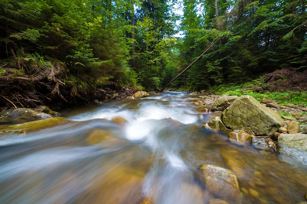 Río que fluye rápidamente a través del bosque verde salvaje