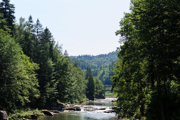 Río con rápidos y piedras entre bosques de coníferas