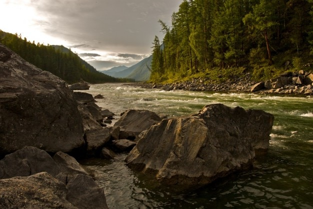 El río a través del bosque