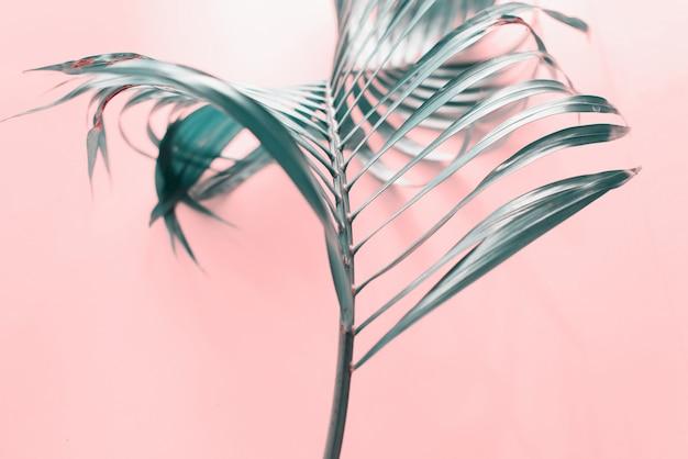 Rizo tropical hoja de palma fondo plano lay top
