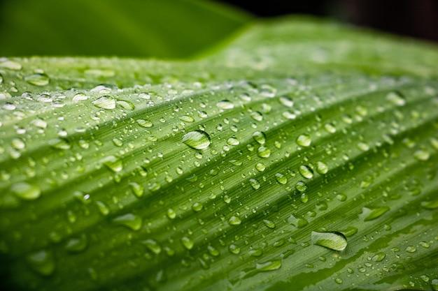 Rocío y fondo de hojas verdes