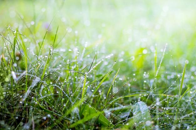 Rocío de la mañana en el bosque sobre la hierba. frescura de la mañana en el campo y en los prados. mañana de verano en el bosque