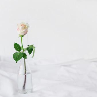 Rosa blanca pintada de pie en jarrón de vidrio.