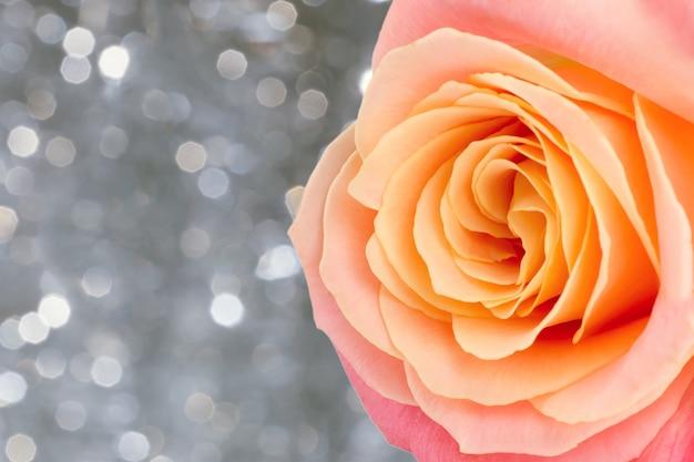 Rosa coral hermosa del color en fondo del bokeh del día de fiesta. plantilla de san valentín