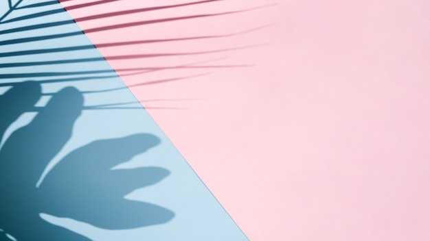 Rosa dominante con fondo azul cielo con sombras de hojas
