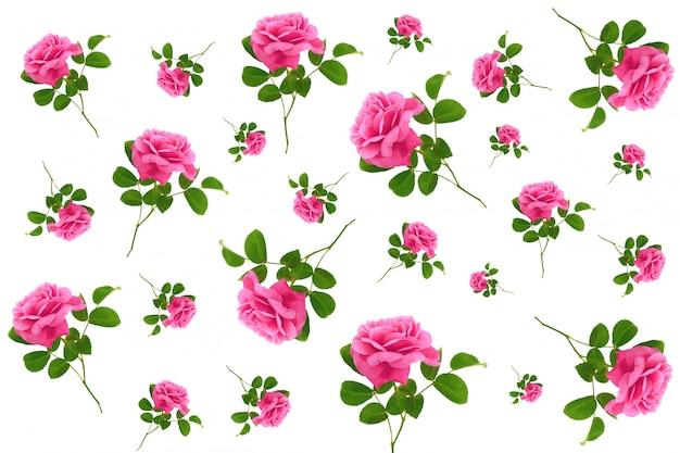 Rosa flor de patrones sin fisuras. fondo floral