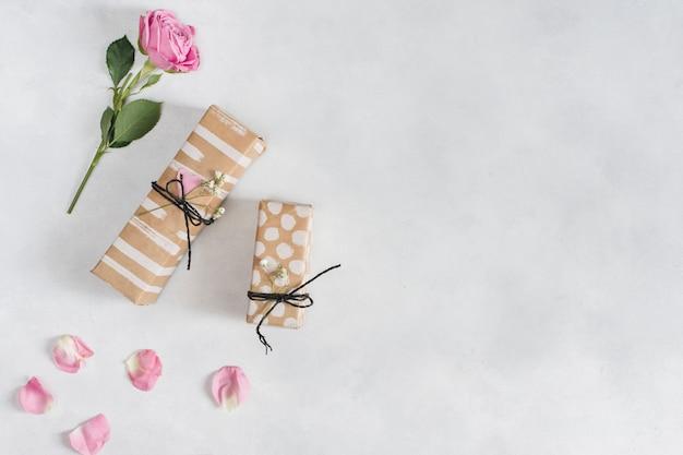 Rosa maravillosa fresca cerca de regalos y pétalos