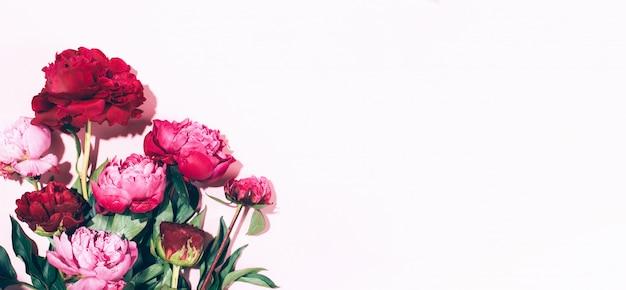 Rosa peonías y hojas con sombra dura sobre fondo pastel