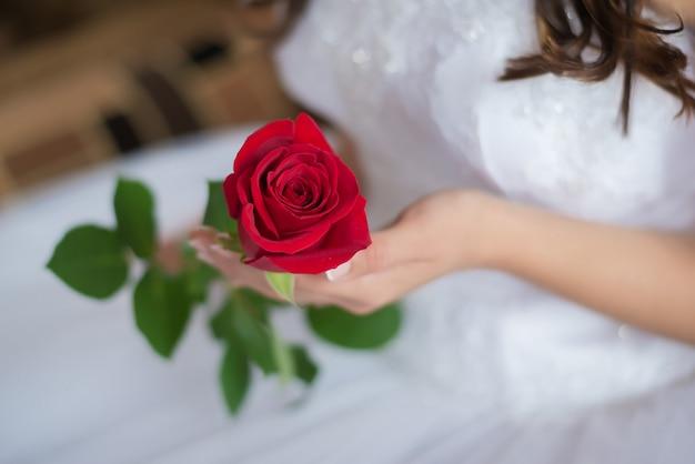 Una rosa roja en las manos de la novia closeup
