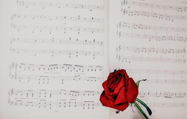 Rosa roja en las notas musicales