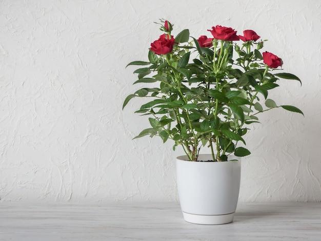 Rosa roja en una olla sobre una mesa de madera, espacio de copia.