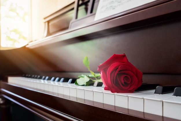 Rosa roja en el piano