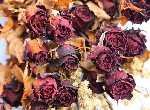 Rosa roja seca sobre blanco