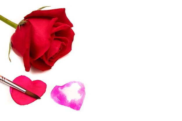 Una rosa roja sobre fondo blanco.
