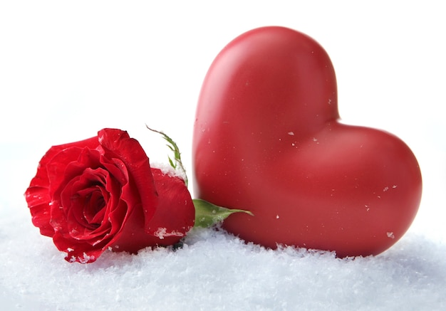Rosa roja sobre fondo de nieve