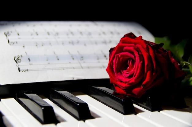 Una rosa roja en las teclas del piano.