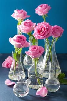 Rosa rosa flores en matraces químicos sobre azul
