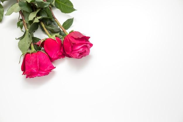 Rosa rosa flores en mesa blanca