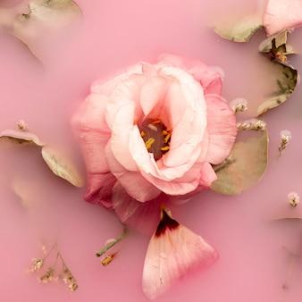 Rosa rosa en primer plano de agua rosa