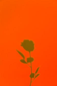 Rosa sombra sobre un fondo naranja