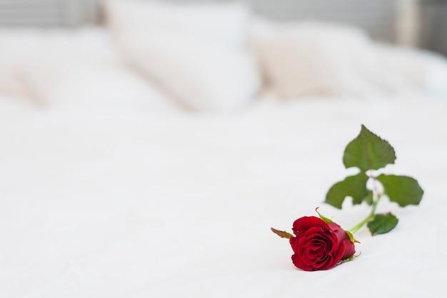 Rosa vinosa en cama con ropa blanca.