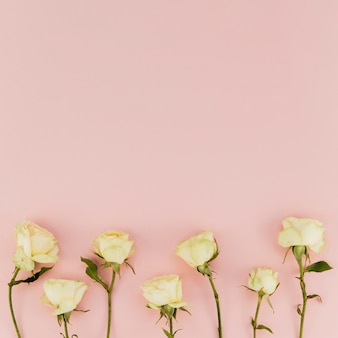 Rosas blancas delicadas con espacio de copia