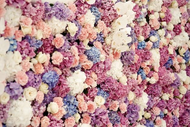 Las rosas blancas y las hortensias rosas hacen una hermosa pared de flores