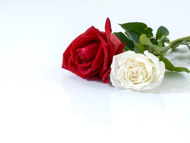 Rosas blancas con rosas rojas sobre blanco.