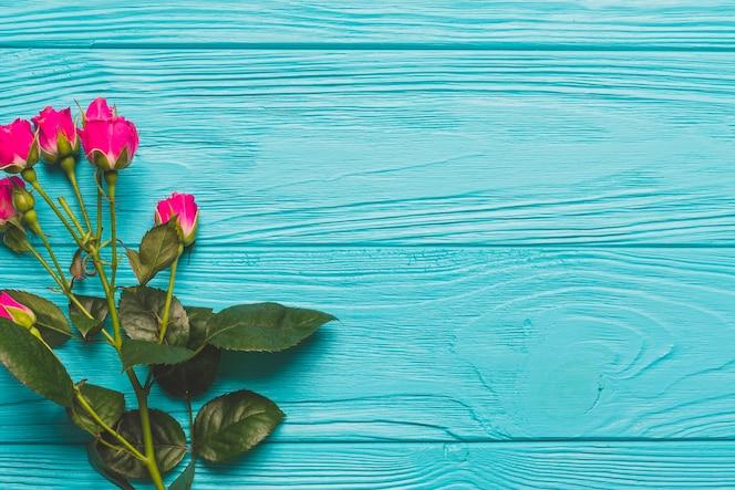 Rosas brillantes sobre fondo turquesa