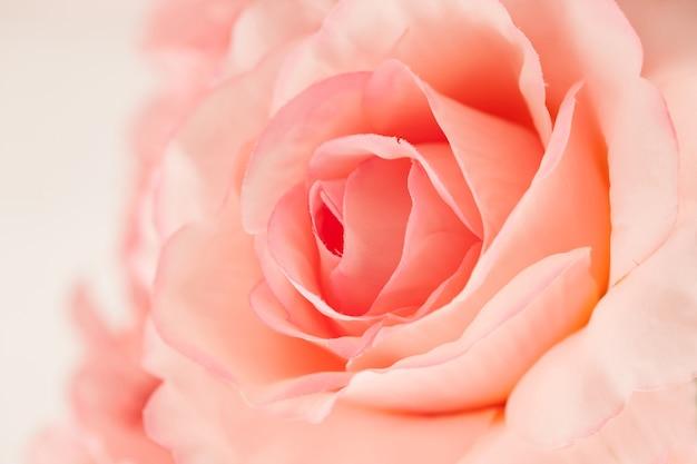 Rosas de color dulce hechas con degradado en estilo suave para el fondo abstracto